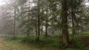 Trek Salam Montagne Chartreuse Charmant Som (4) (Copier)