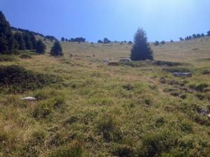 Trek Salam Montagne Chartreuse chamechaude (2) (Copier)