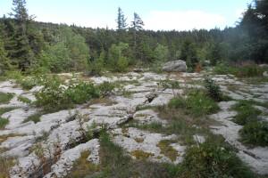 Trek Salam Montagne - Vercors - plateau Sornin - lapiaz calcaire erosion