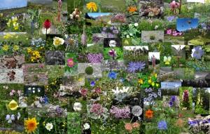 Trek Salam Montagne fleurs écrins magie ature beauté