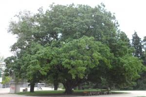 Trek Salam Montagne - parc paul mistral - arbre