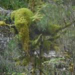 vercors-rif-bruyant-etre-de-la-nature-presence-mousse-treks-salam-montagne