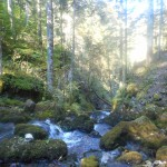 vercors-rif-bruyant-torrent-treks-salam-montagne