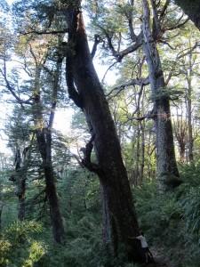 trek salam montagne - Charles Bousset -arbre - connexion - arbre - Nature
