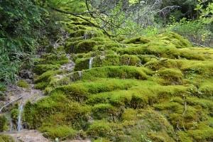 trek salam montagne - Vercors - gorges omblèze - mousse cascade séjour