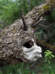 trek salam montagne - magie - esprit être de la nature - arbre