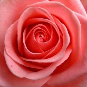médecine des roses grenoble